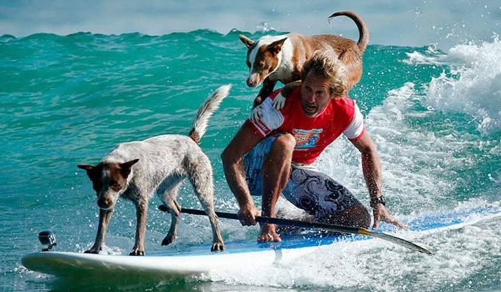 Chris Aboitiz, el australiano que surfea con sus perros