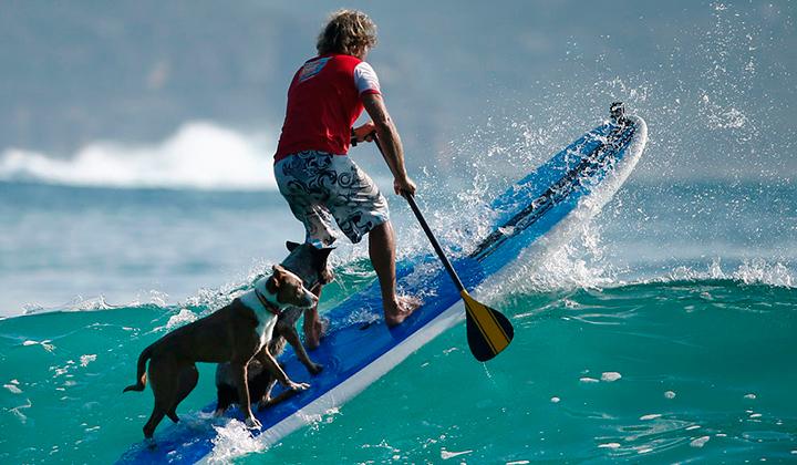 Chris-alboitiz-el-australiano-que-surfea-con-sus-perros-backseries-2
