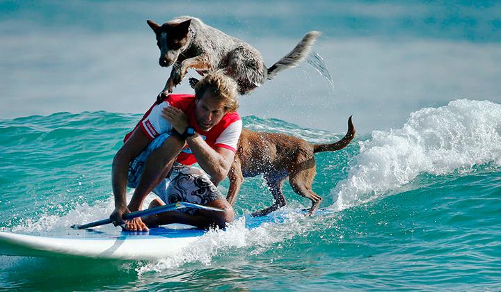 Chris-alboitiz-el-australiano-que-surfea-con-sus-perros-backseries-3