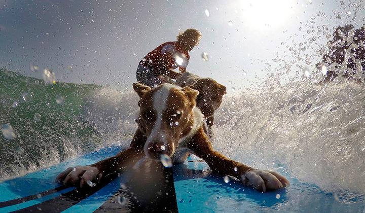 Chris-alboitiz-el-australiano-que-surfea-con-sus-perros-backseries-4