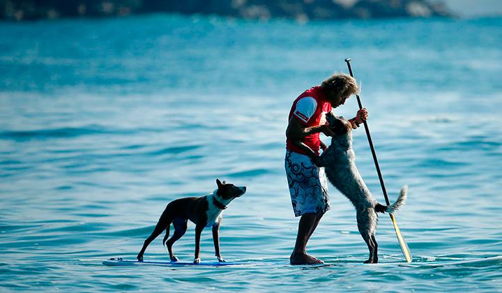 Chris-alboitiz-el-australiano-que-surfea-con-sus-perros-backseries-7