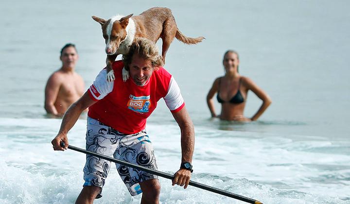 Chris-alboitiz-el-australiano-que-surfea-con-sus-perros-backseries-8